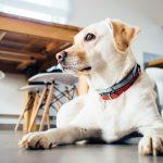 Pet Friendly Workplace Trend is Growing