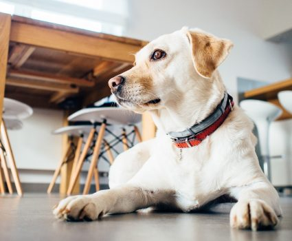 The pet friendly workplace trend is growing as companies realize this brings more motivation, happiness, and well-being to their employees.