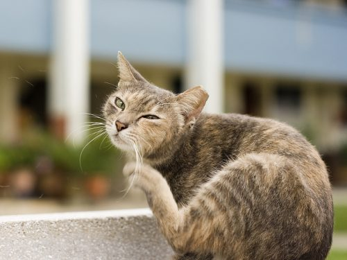 Does your cat have fleas and flea eggs? Here are a few things to look out for.