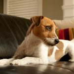 5 Ways to Keep Your Dog off the Couch