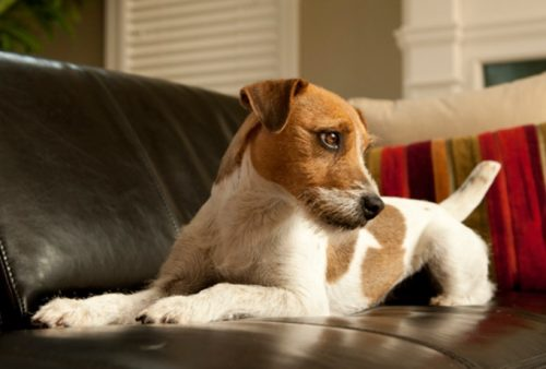 Are your dogs constantly hogging your chair and shedding hair all over it? Here are 5 ways to keep your dog off the couch, once and for all.