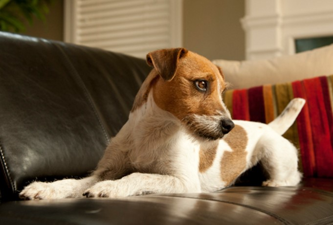 5 Ways To Keep Your Dog Off The Couch Animal Bliss