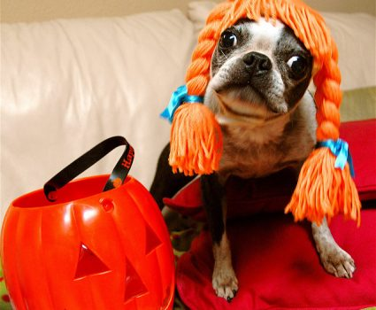 Halloween safety tips to keep your dog safer this year.