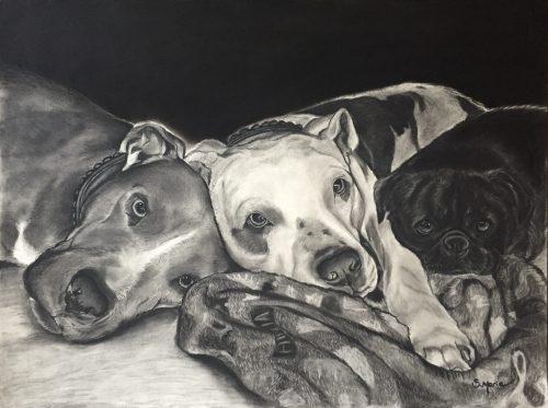 Shannon Marie Schacht - Animal Portrait Artist