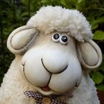 National Hug a Sheep Day : Head to the Nearest Farm!