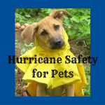Hurricane Safety for Your Pets, Make a Disaster Plan