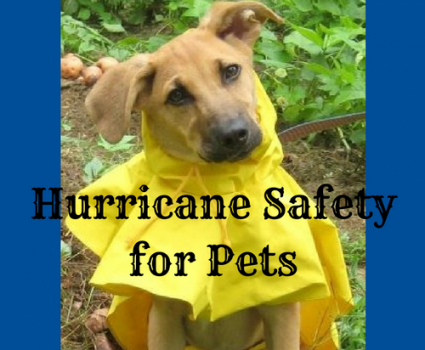 Hurricane safety for your pets is about setting up an Animal Disaster Plan that includes them before the next disaster arrives.