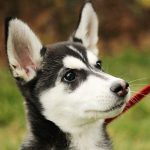 10 Most Popular Crossbreed Dogs in the UK