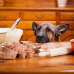 Raw Food for Dogs with Kidney Failure