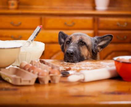 Raw food for dogs with kidney failure should not be the same as the food you are giving your healthy canines.