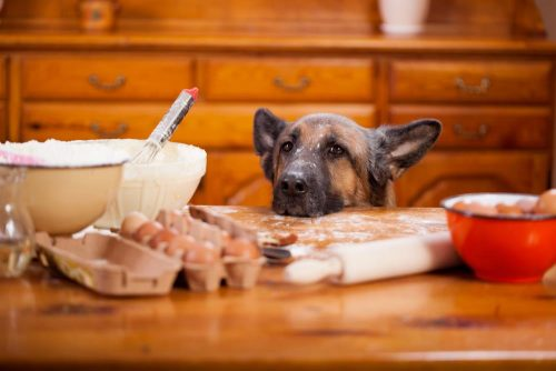 Best Food For Dogs With Kidney Failure
