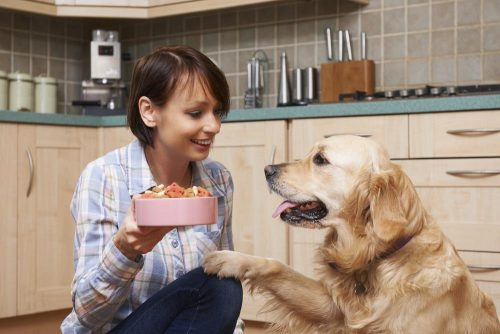 Food for dogs with kidney failure should not be the same as the food you are giving your healthy canines.
