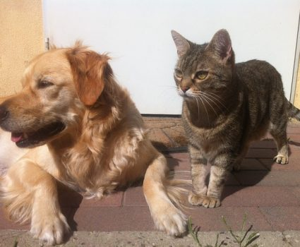 How To Protect Your Pet from Pest Control Dangers
