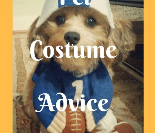 Halloween Pet Safety Tips and Pet Costume Advice