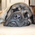 Music Therapy to Calm Your Dog, Relax My Dog