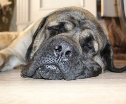 Relax My Dog specializes in music therapy to calm your dog, relieving anxiety, separation anxiety and destructive behavior.