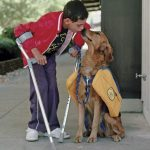 Difference Between Service Dogs and Assistance Dogs, Are they legit?