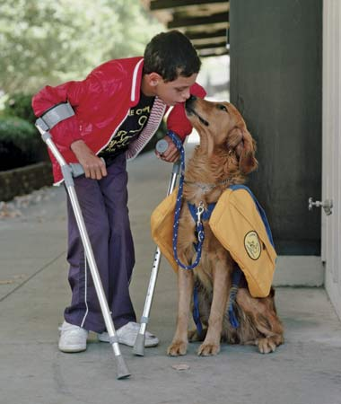 What is the difference between Service Dogs and Assistance Dogs. Are they legit? Find out here.