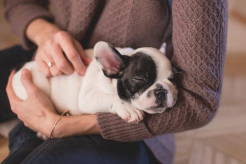 Why You Should Start a Career in Animal Care