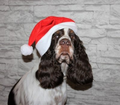 3 Homemade Treats for Your Dog this Christmas