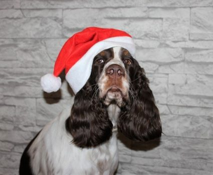 3 safe and easy recipes for homemade treats for your dog this Christmas