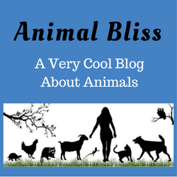 Animal Bliss : a very cool blog about animals - wildlife and domestic pets too. Come check us out.