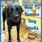 How To Remove Dog Smells: Solutions for a Happier Nose