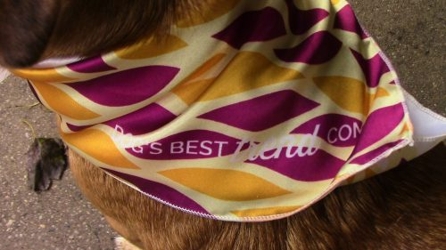 Dog's Best Trend Scarf Review [and Giveaway]