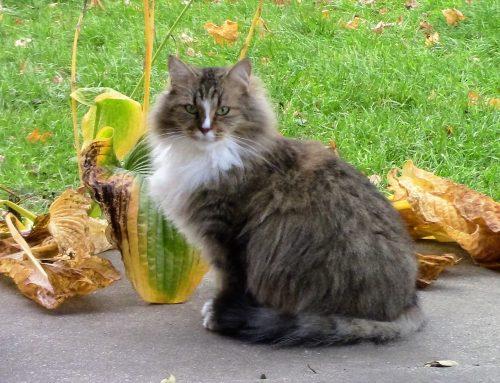 Maisy, 3 yrs