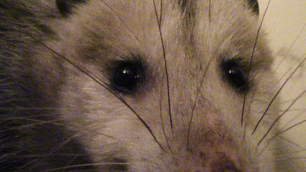 I found an opossum in my bathroom. Here's what I did.