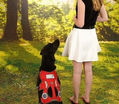 12 Common Misconceptions about Service Dogs Clarified