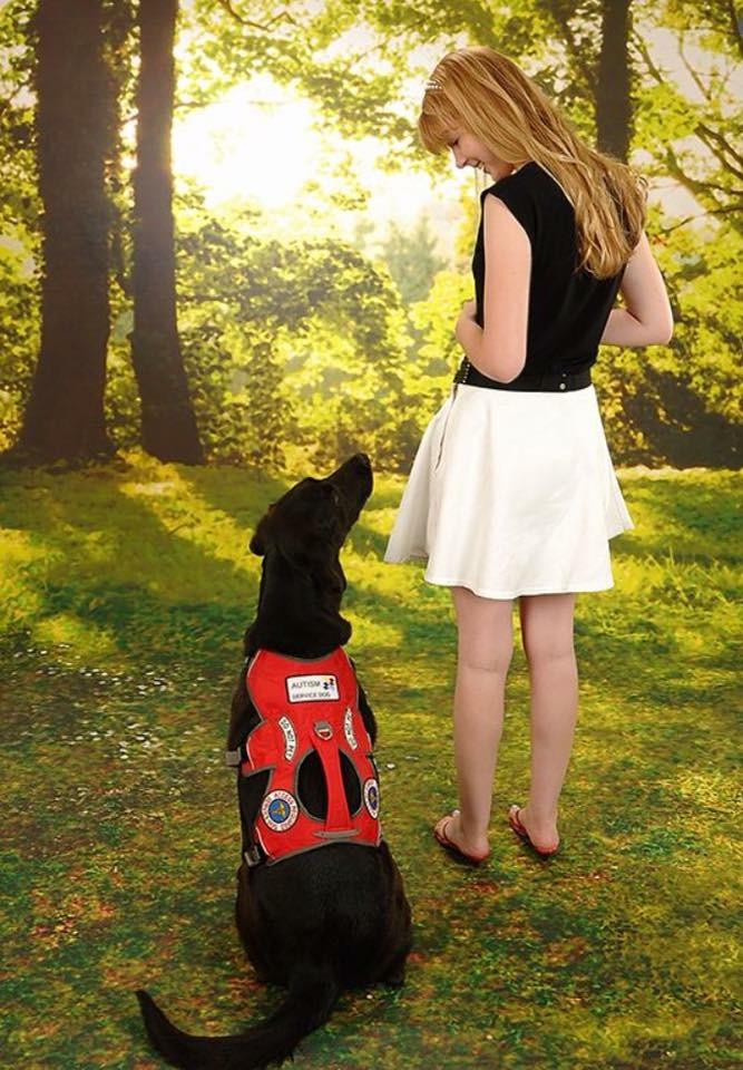 Service dog trainer, Kaelynn Paltrow, our guest writer today, clears up 12 of the most common misconceptions about service dogs. Read on!