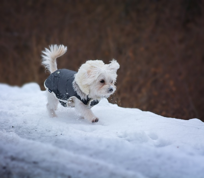 Winterizing Your Home for Happy Paws
