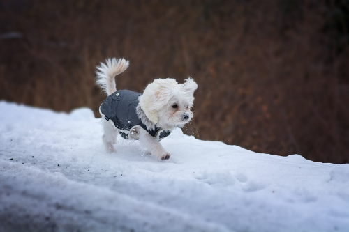 Here are some ideas about winterizing your home for happy paws.