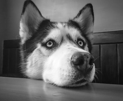 How To Remove Dog Smells : Solutions for a Happier Nose