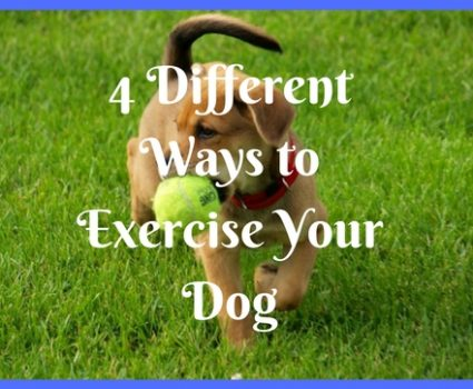 4 Different Ways to Exercise Your Dog