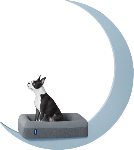 The Casper Dog Bed Review