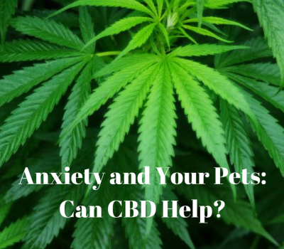 Anxiety and Your Pets: Can CBD Help? Cannabidiol Hemp