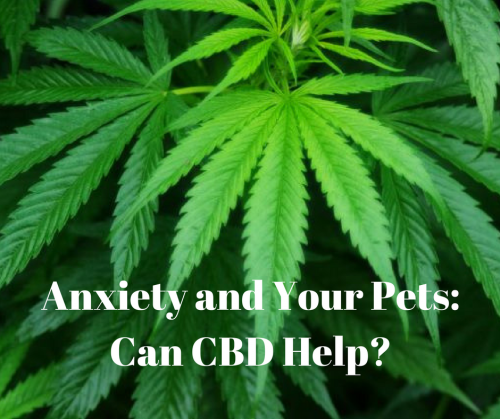 Yes, CBD Cannabidiol hemp oil can help with anxiety and your pets.
