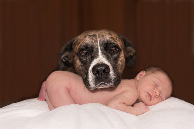 Welcoming a new baby to the family is exhilarating and overwhelming. Preparing your dog for the arrival of your baby