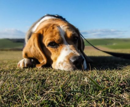 4 Dog Health Myths You Need To Know