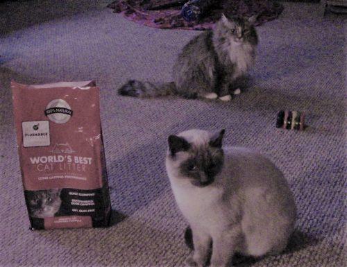 World's Best Kitty Litter Brand