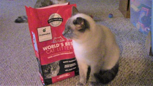 This review reveals the truth about Worlds Best Cat Litter.