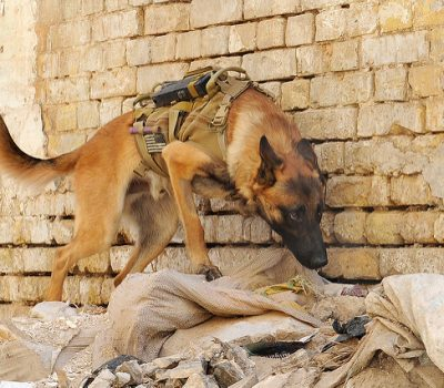 Military Dogs are Heroes With Fur : Military Working Dogs