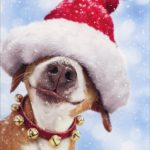 Pet Safety Tips for the Holidays : Have fun!