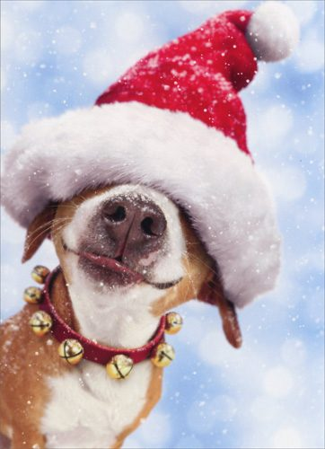 Consider these pet safety tips for the holidays while decorating your house and planning your feasts for family and friends