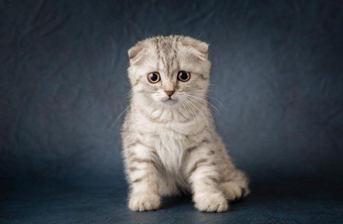 10 Most Unique Cat Breeds