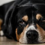Tramadol For Dogs: What You Need To Know
