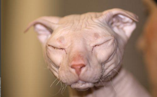 10 Unique Cat Breeds