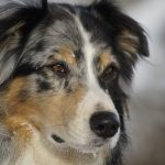 Canine Epilepsy: A First Experience Out of the Blue